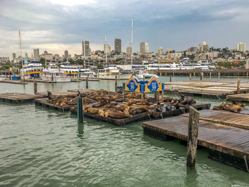 Zeeleeuwen Pier 39 San Francisco